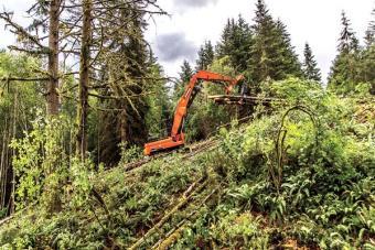 Doosan DX380LL-5 Log Loader moves timber.